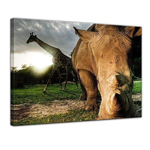 Keilrahmenbild Nashorn und Giraffe - 120x90 cm Bilder als Leinwanddruck Fotoleinwand Tierbild exotische Tiere - afrikanische Tiere im Sonnenuntergang