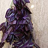 #4: Samriddhi Artificial Hanging Bunch Of Delicate Purple Leave Exotic Lovely Look Long