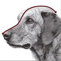 Trixie Muselière pour chien Bride en cuir avec le front strap-parent