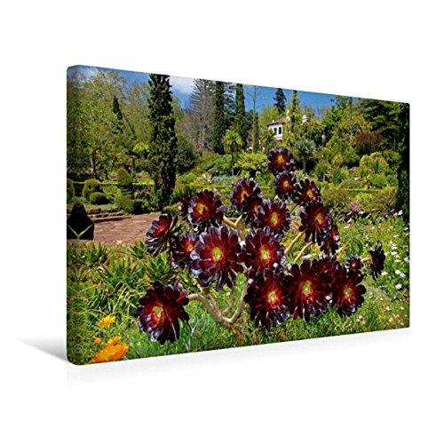 Premium Textil-Leinwand 45 cm x 30 cm quer, Blandys Garden Aeonium | Wandbild, Bild auf Keilrahmen, Fertigbild auf echter Leinwand, Leinwanddruck (CALVENDO Orte)