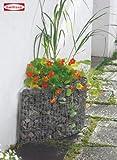 Haus Wand Beet Gabione 95590