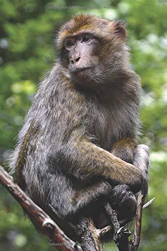 Notizbuch Affe: Tagebuch / Notizbuch gepunktet mit 120 Seiten und Affen Bild als Motiv