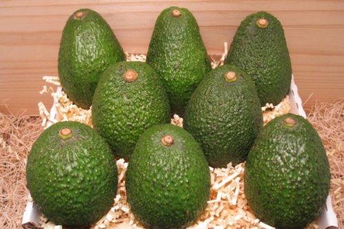 Avocados Hass (1 Stück) - Bio