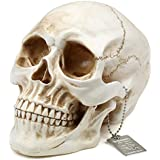 H&S® Life Size Replica Realistic Human Skull Gothic Halloween decoration Ornament