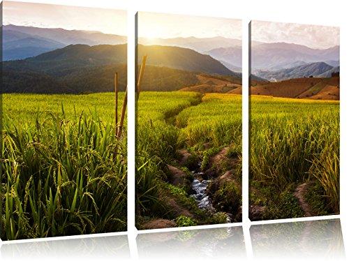 paddy-plantation-en-asie-3-pc-photo-canvas-image-120x80-sur-toile-xxl-normes-photos-compltement-enca