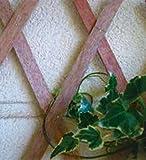 VERDELOOK Traliccio Estensibile in Legno Naturale Dimensioni 150x200 cm, Decorazioni terrazza