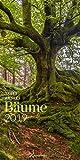Bäume 2019, Wandkalender im Hochformat (33x66 cm) - Landschaftskalender / Naturkalender mit Monatskalendarium