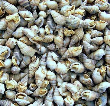 Wildlife FD Blackline - Gefriergetrockenete Sea Snails Futterschnecken, 75 ml