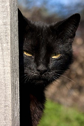 Suspicious Black Cat Keeping Watch Journal: 150 Page Lined Notebook/Diary (Katze Ebony)