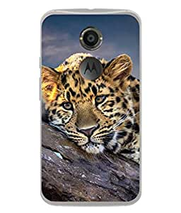 PrintVisa Designer Back Case Cover for Motorola Moto X2 :: Motorola Moto X (2nd Gen) (Aggression Animal Asia Expression Background Bengal Beautiful Big)