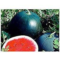 Melone - Wassermelone Sugar Baby - Zucker Baby - 100 Samen