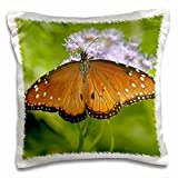 USA, Texas, Rio Grande Valley. Queen 16x16 inch Pillow Case