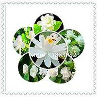 20 semi / pack Casa e giardino in camicia semi di fiori d'uovo fiore fiori recisi ornamentali composizione floreale