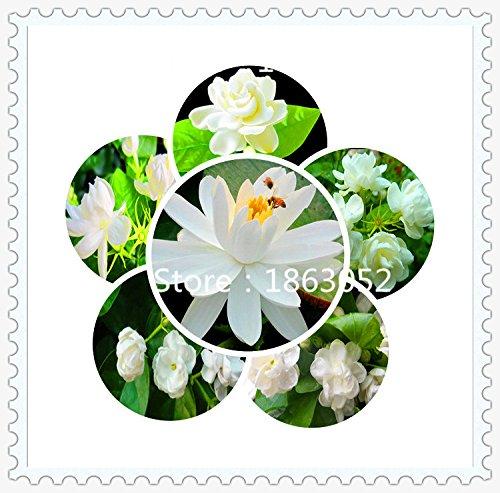 Newsbenessere.com 51e5evhKpIL 20 semi / pack Casa e giardino in camicia semi di fiori d'uovo fiore fiori recisi ornamentali composizione floreale