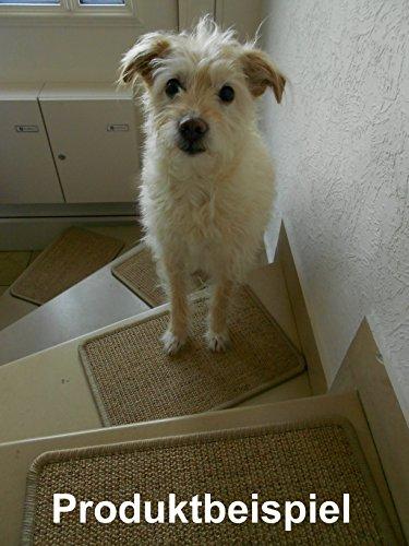 BELLOsteps® Stufenmatten für kleine Hunde ohne Kleber, 13er Set Champ beige