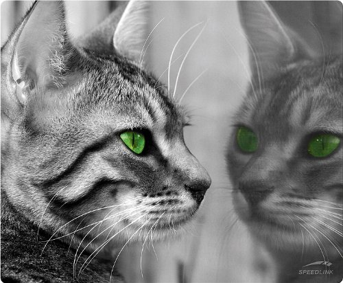 Speedlink Silk Mauspad Katze (weiche Oberfläche, geringer Gleitwiderstand, gummierte Unterseite, verschiedene Motive)