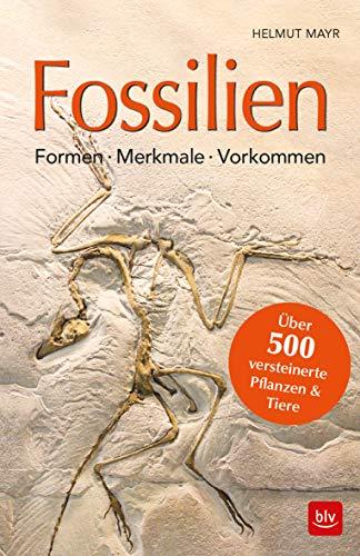 Fossilien: Formen, Merkmale, Vorkommen Über 500 versteinerte Pflanzen & Tiere (BLV)