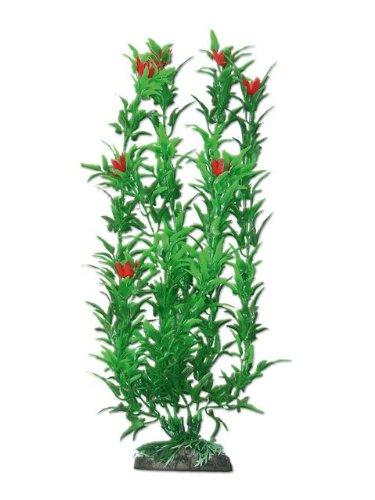 wave-hygrophila-plante-classique-avec-fleur-rouge-pour-aquariophilie-taille-l