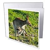 3drose GC 22791_ 26x 15,2cm'kangourou et Joey sauvages Queensland Australie' carte de voeux (lot de 12)