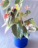 Durstkugeln 4 Stück Bewässerungskugeln 8 cm Durstkugel Pflanzensitter DKGR