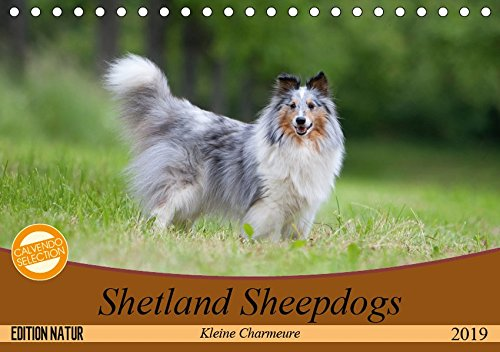 Kleine Charmeure (Tischkalender 2019 DIN A5 quer): Shelties mit besonderem Charme (Monatskalender, 14 Seiten ) (CALVENDO Tiere) ()