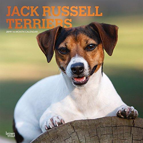 Jack Russell Terriers 2019 - 18-Monatskalender mit freier DogDays-App: Original BrownTrout-Kalender [Mehrsprachig] [Kalender]