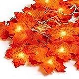Catena Luminosa interno esterno filo Luci natalizie Stringa Illuminazione giardino 20 lucine led decorative Ghirlanda Decorazioni Casa di foglie, Festa, Matrimonio, Giardino, albero di Natale