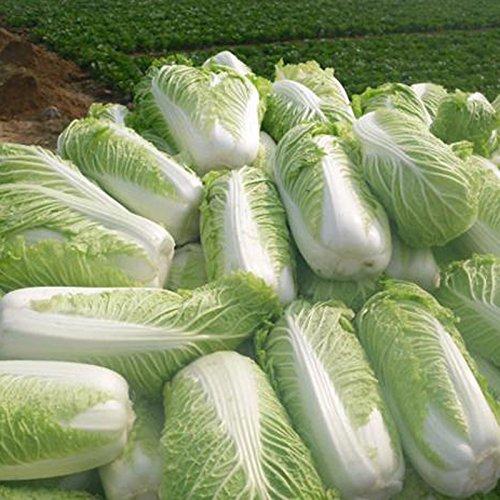 Inovey 100 Pcs Chinois Délicieux Chou Graines Semences De Légumes Verts Nutritifs Brassica Plantes Jardin