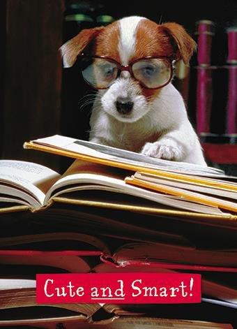 Fotografien Grußkarte (gbbc3805) Prüfung Congratulations–Hund Niedlich und Smart Prüfung Smart