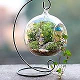 Seguryy Eisen Hochzeit Kerze Halter Candlestick Glas Ball Laterne Hanging Stand (Schwarz -5PCS)