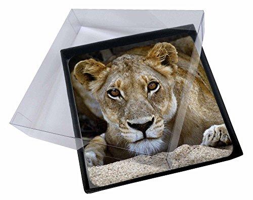 zer gesetzt Weihnachtsgeschenk (Lioness-bild)