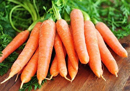 Mohrrueben Riesen/ca.50 Samen/Vitamin- und Mineralreich/Sehr hoher Carotingehalt