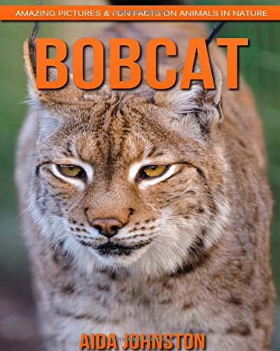 bobcat-amazing-pictures-fun-facts-on-animals-in-nature