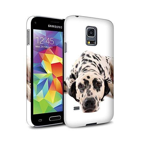 On Hülle/Case für Samsung Galaxy S5 Mini/Dalmatiner Muster/Hund/Hunde Kollektion ()
