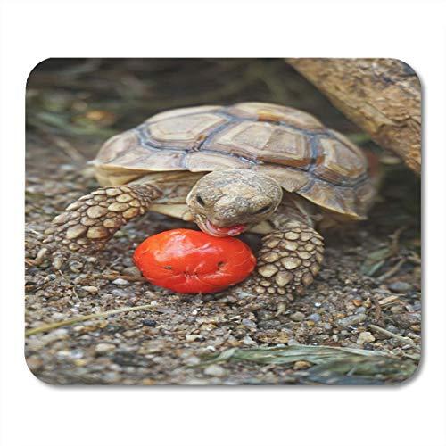 Luancrop Mauspads Afrikanische Spornschildkröte im Garten rote Kirsche essend Mausunterlage für Notizbücher, Tischrechnermatten Bürozubehöre - Afrikanische Kirsche