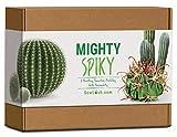 Sow Lush Mighty Spiky Cactus, Kit Regalo con Semi, Tutto l'Essenziale per Coltivare 5 bellissime varietà irsute, Piene di personalità