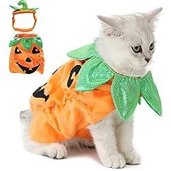 Legendog Disfraz de Halloween para Gato, Disfraz de Calabaza con Calabaza, Divertido Disfraz para Gato de Halloween con Calabaza