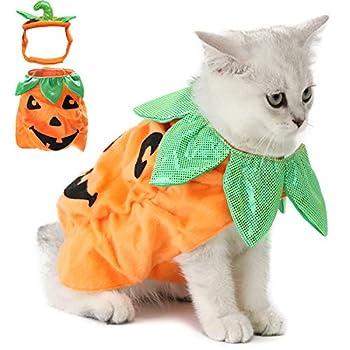 Legendog Costume d'halloween avec des citrouilles rigolotes et des vêtements de Chat
