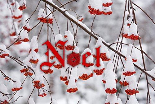Preisvergleich Produktbild Charles Gurche / Danita Delimont - USA Washington Spokane County Western Mountain Ash berries Kunstdruck (35,56 x 22,86 cm)