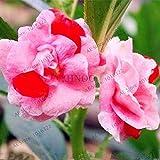100 piezas / bolso Semillas de jardín Bonsai Impatiens, Jardín Balcón en maceta las plantas verdes Flores multicolores Impatiens, purificar el aire 9