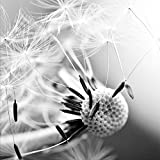 artissimo, Glasbild, 20x20cm, AG4053A, Pusteblume I, Blumen-Bild, Bild aus Glas, Moderne Wanddekoration aus Glas, Wandbild, Schwarz-Weiß