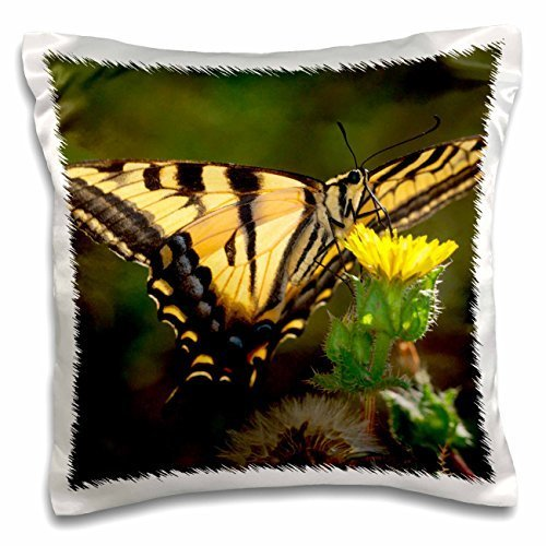 USA, California, San Diego, Mission Trails Park. An Anise Swallowtail. - 16x16 inch Pillow Case (Mission Park Trails)