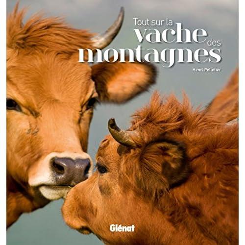 Tout sur la vache des montagnes