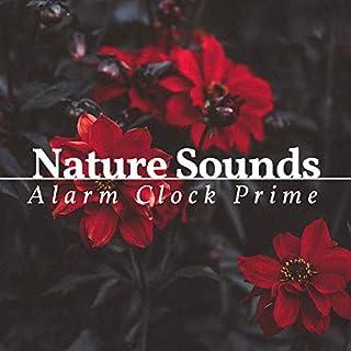 Nature Sounds Alarm Clock Prime
