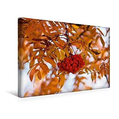 Premium Textil-Leinwand 45 cm x 30 cm quer, Eberesche im Herbstkleid   Wandbild, Bild auf Keilrahmen, Fertigbild auf echter Leinwand, Leinwanddruck (CALVENDO Natur)