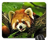Rot Panda Mauspad, Mousepad (Bears Mauspad)