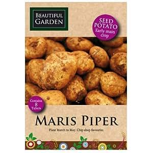 8 pommes de terre Maris Piper - semences précoce des cultures principal en cabane vendeur