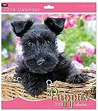 BCBGMAXAZRIA Tallon cute cuccioli–quadrato calendario da parete 2019