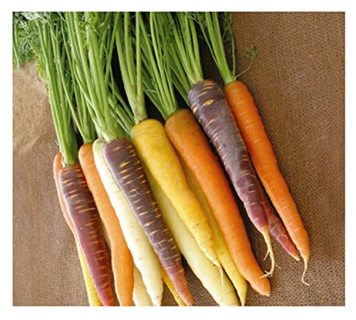 K285 Harlekin F1 Mix Lot de 450 graines de légumes de jardin