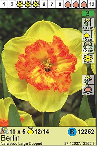 """Narcissus – Narzisse/Osterglocke"""" Berlin"""" (5 Blumenzwiebeln)"""